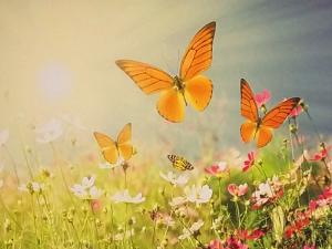 Praxisraum mieten Wien Praxisraum Schmetterling